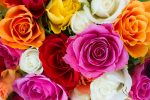 """Цитати за цвеќињата - убавината и среќата во овој свет: """"Можете да ги исечете сите цвеќиња, но не можете да спречите да дојде пролетта""""- Пабло Неруда"""