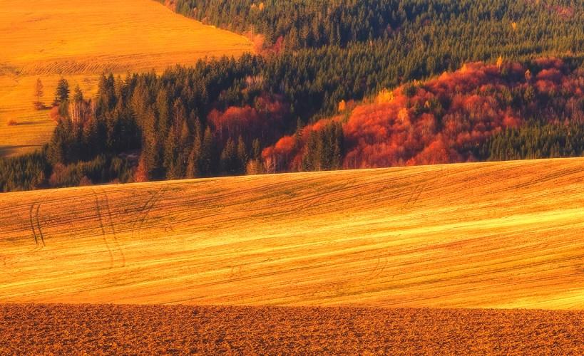 jesień krajobraz druk