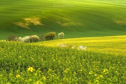 Wiosenne Morawy /Czechy
