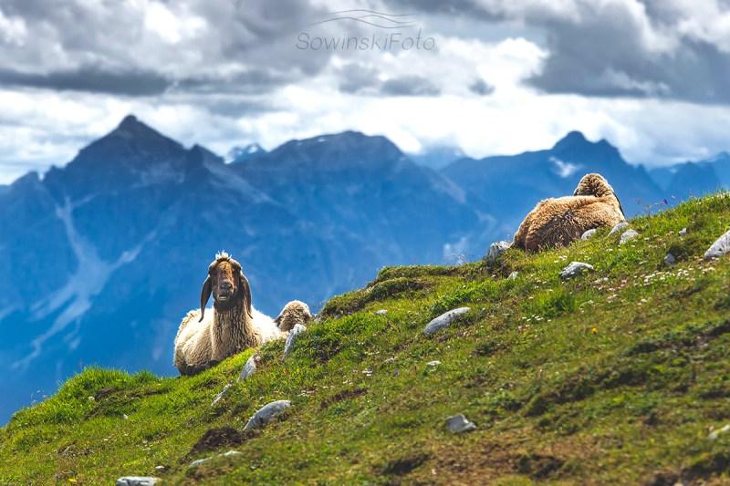 Alpy Austria