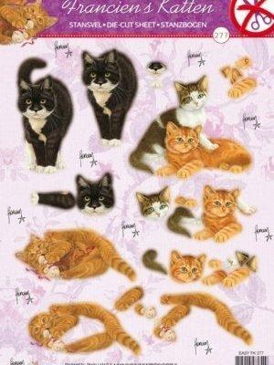 stansvel franciens katten 1