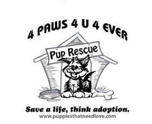 4 paws local shelter