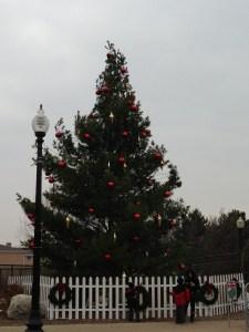 Tree Pre-light2