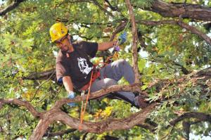 c9b5c illinois tree climbing tree competition 2009 120