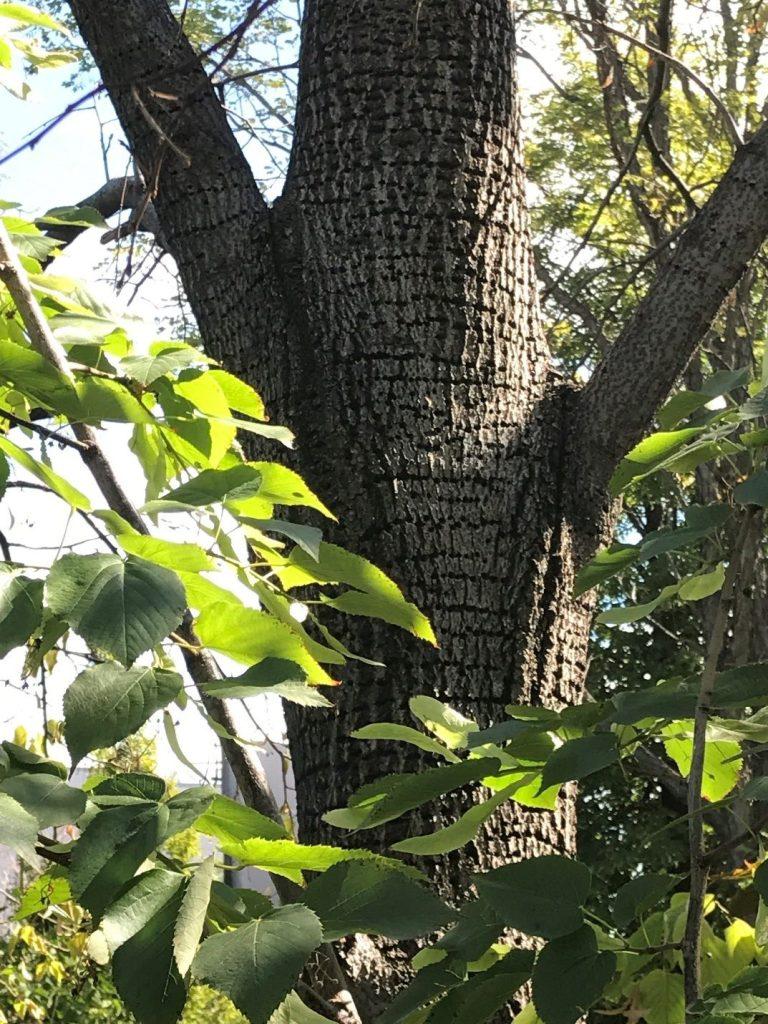 Tree Green Leaf Yellow Bellied Sap Sucker