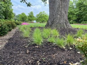 Kramer Tree Mulch Products - Leaf Mulch