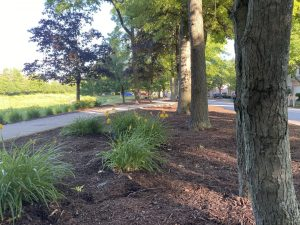 Kramer Tree Specialists Mulch Products - Enhanced Special Blend