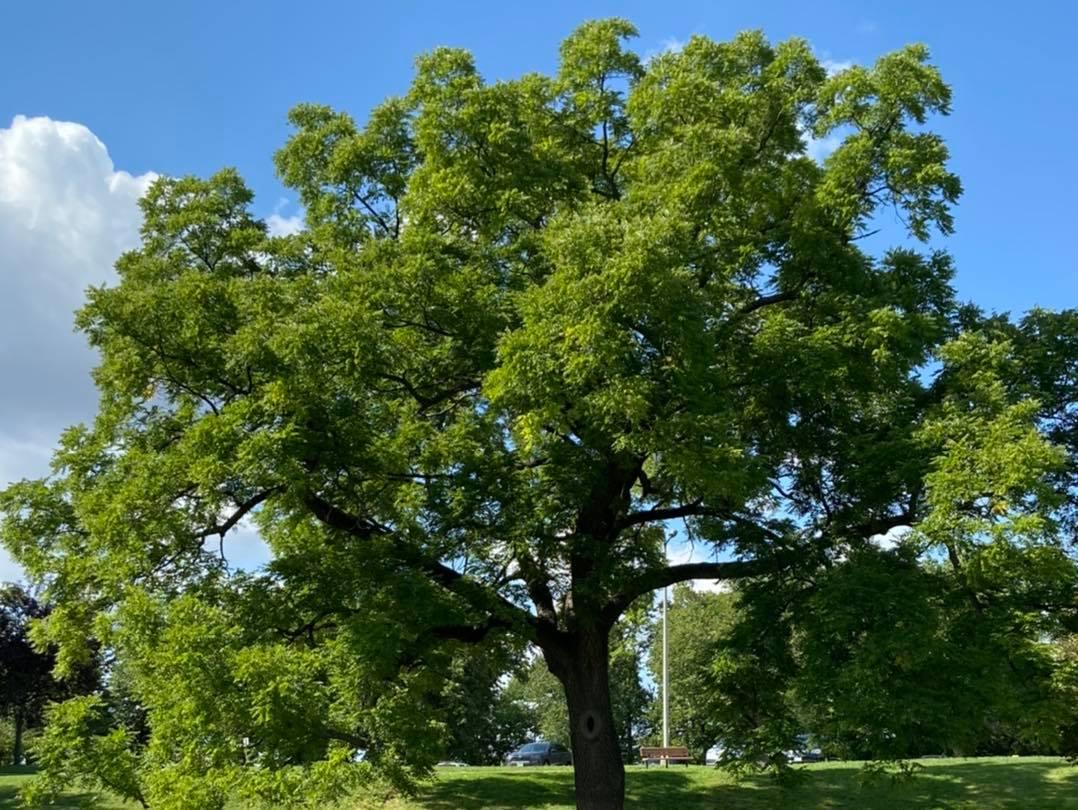 Kramer Tree Specialists - Tree