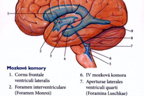 mozkovekomory