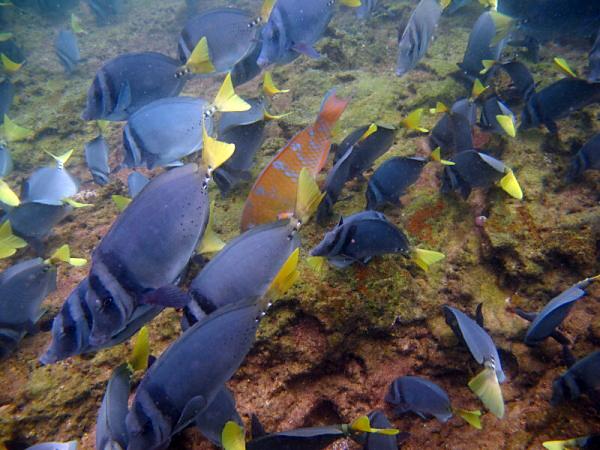 Podmořský život v galapážských vodách...