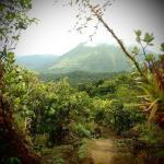 pripravy_na_panamu_tropicka_dzungle