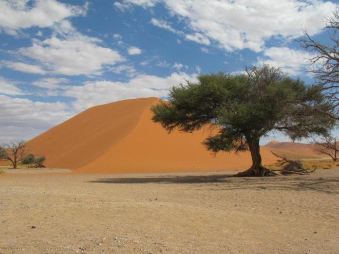 Krása pouště.