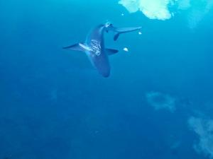 žraloci nevypadali úplně kamarádsky.