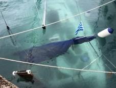 Lodě potopené hurikánem Zorbas v Ephidauru (foto Skipřenka)