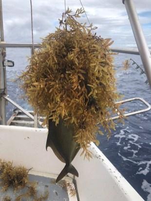 Martin lovil ryby i se Sargasovým salátem...