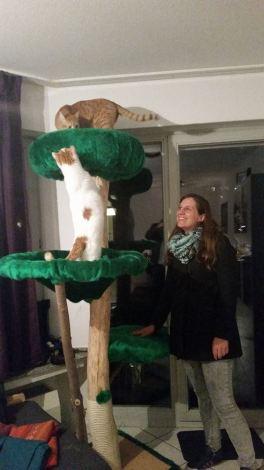 Gecko Baum