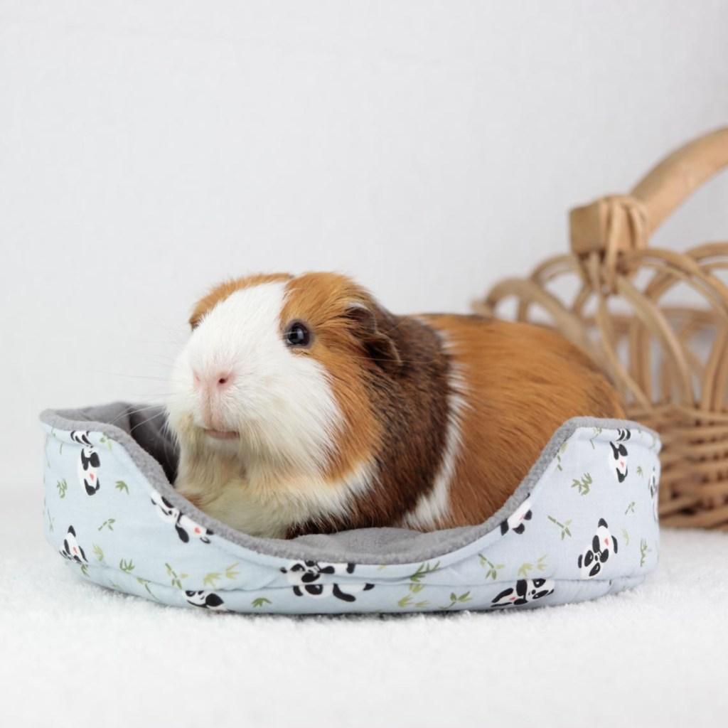 Produkttester Meerschwein Joker in rundem flachem Kuschelbett