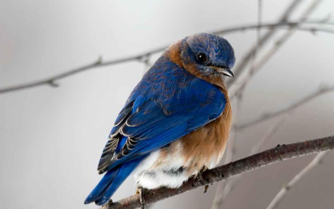 HOW TO JAIL A BIRD by Bayowa Ayomide