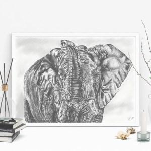 Sloní moudrost