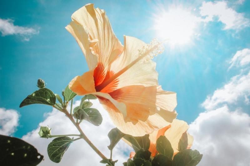 cahaya matahari dan subjek