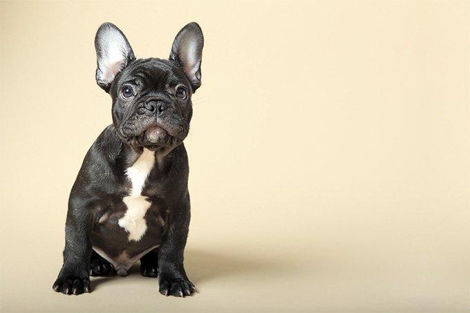 Jenis anjing 2