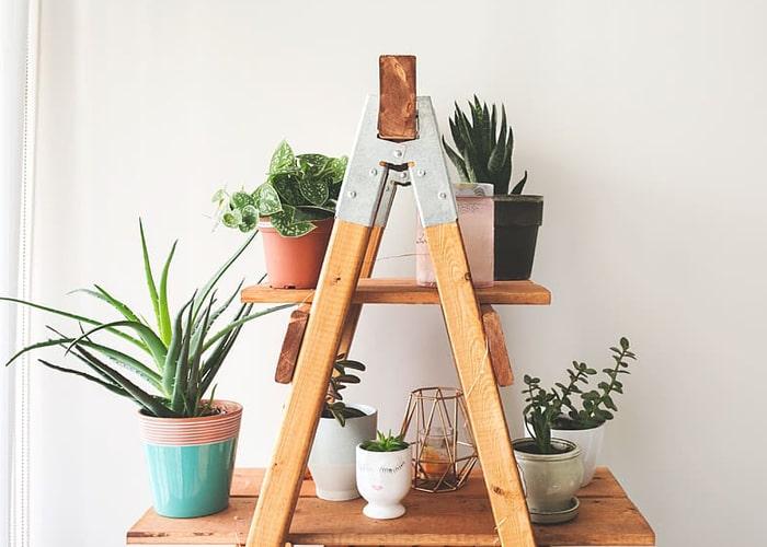 partisi ruangan tanaman hias