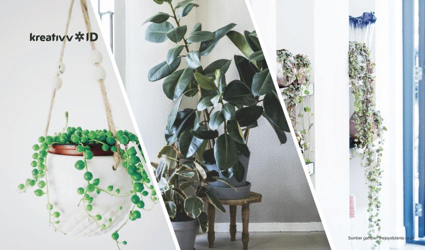 tanaman indoor yang instagramable