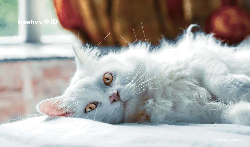 film pecinta kucing
