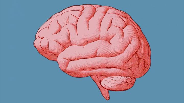 ilustrasi-otak