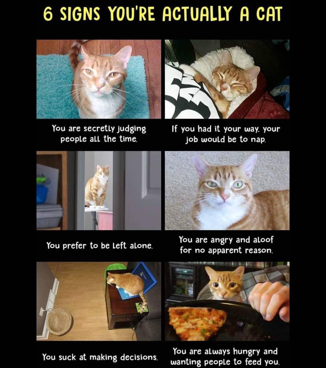 meme-kucing