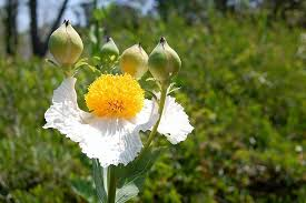 bunga-tinkerbell-4