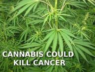 cannabis gegen darmkrebs