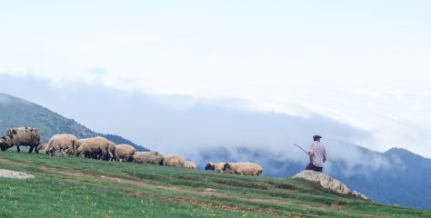 The Shepherds and the Sheep