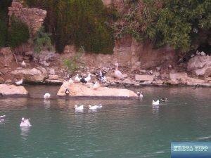 Überreste römischer Fischbehälter in einem künstlichen Teich