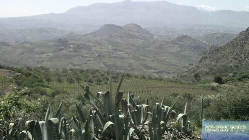 Weinbaugebiet südlich von Iraklion