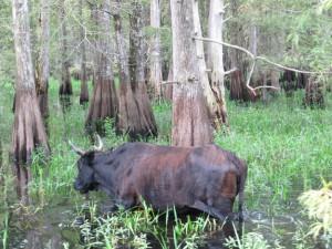 Everglades_3