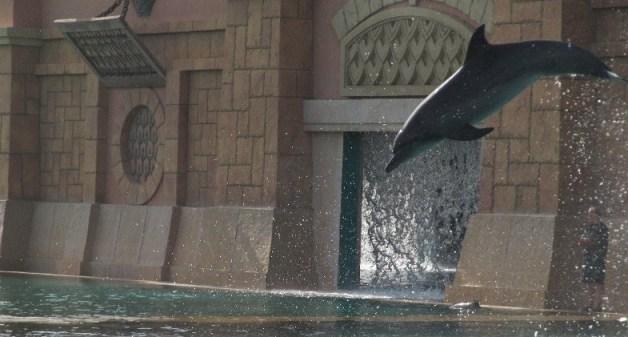 Atlantis Dubai - Dolphin Bay