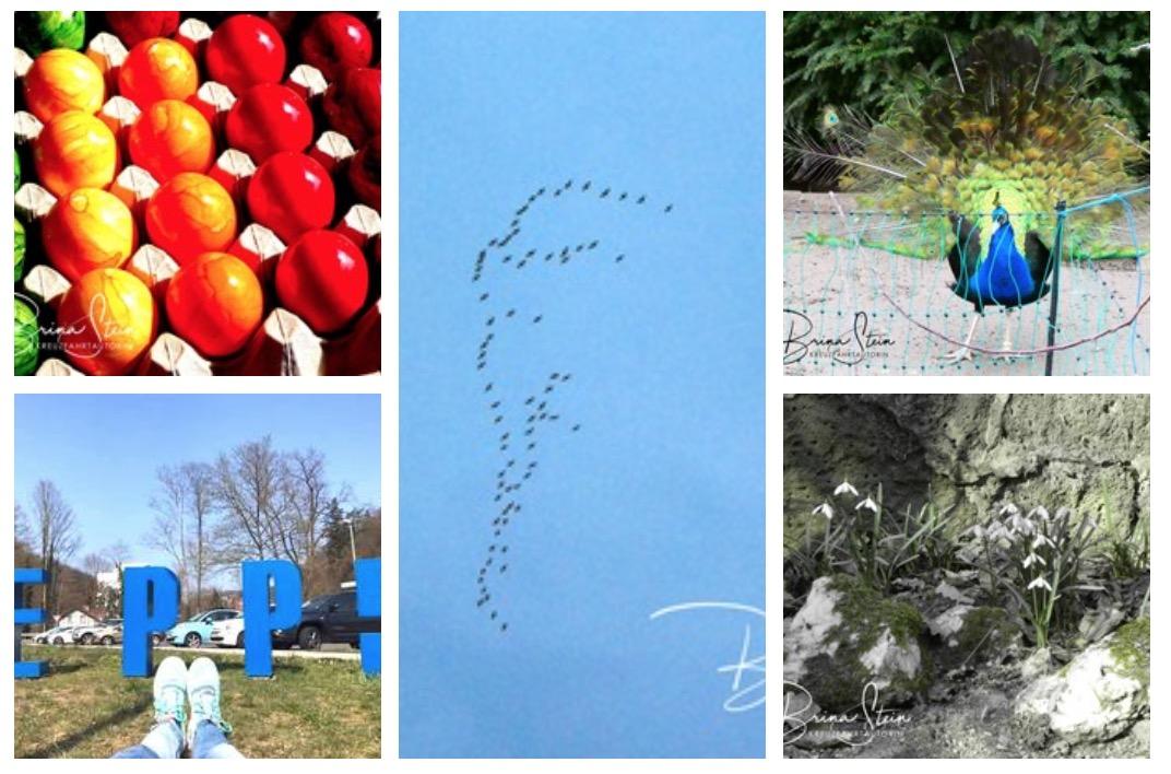 Frühlingsfotos – meine 5 schönsten Bilder