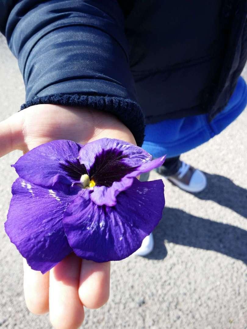 ...die Blume von Melk geht an...
