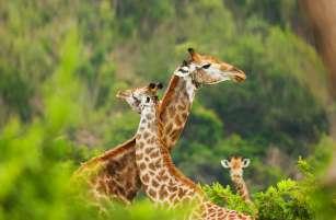 AIDAaura_Weltreise_Suedafrika