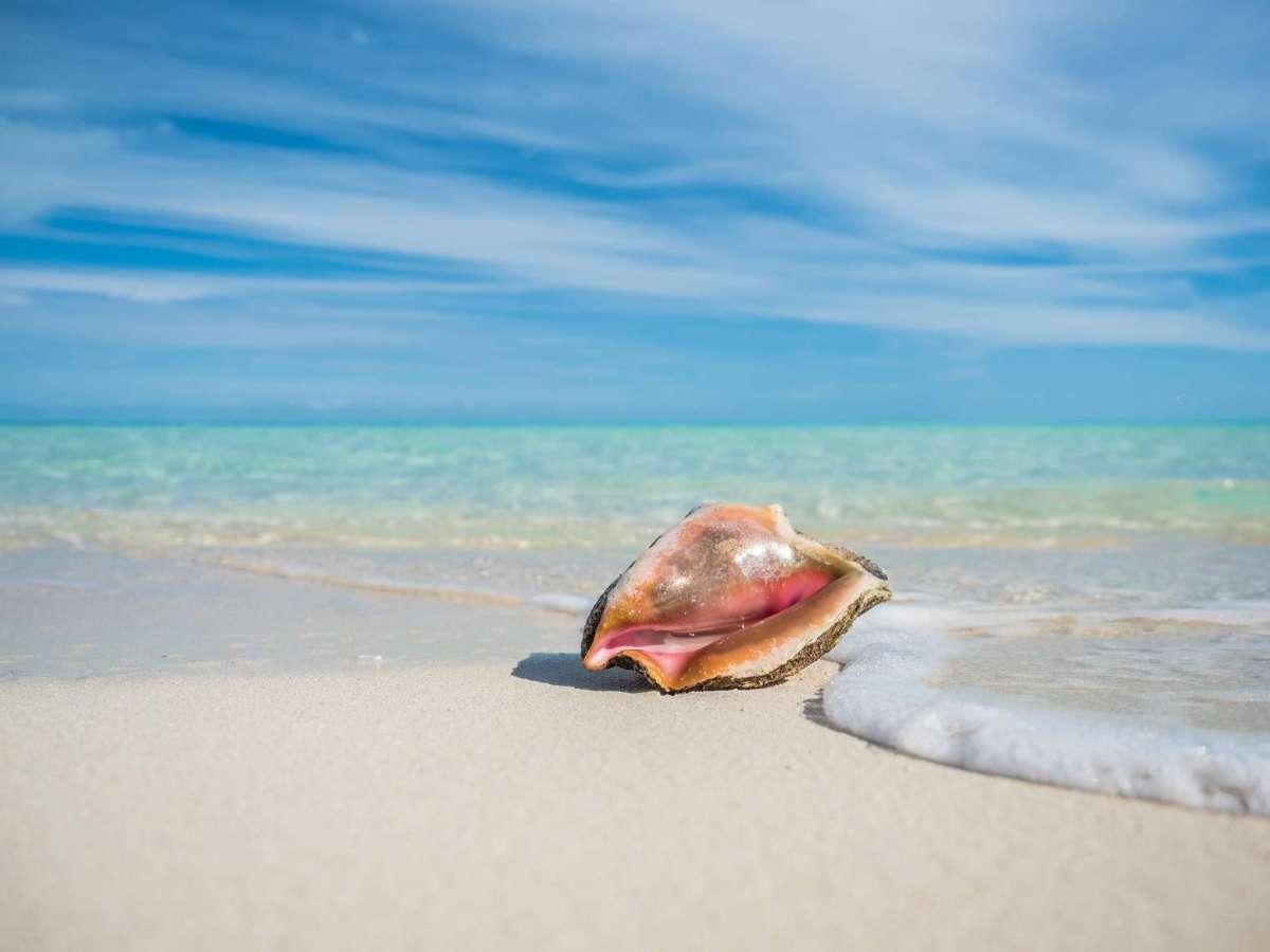 """Das erwartet die Gäste der ersten MSC Privatinsel in der Karibik """"Ocean Cay MSC Marine Reserve"""""""
