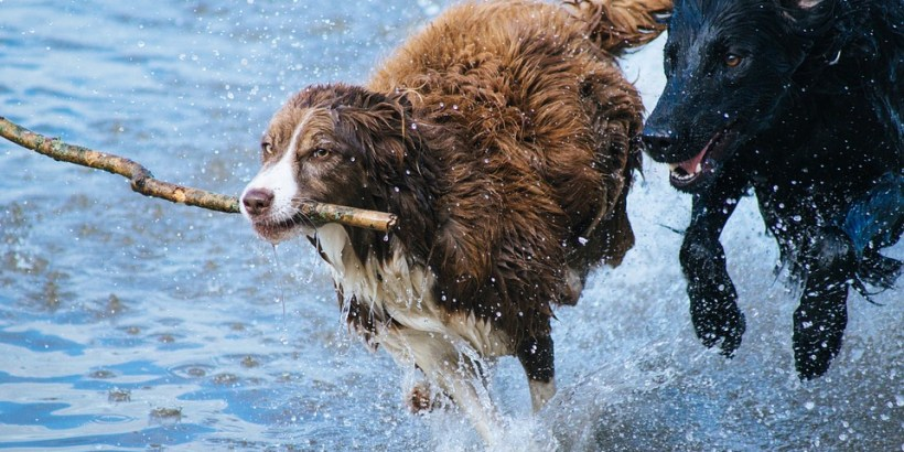 Hundekreuzfahrt 1avista