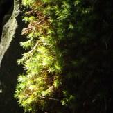 Okertal Harz Moos