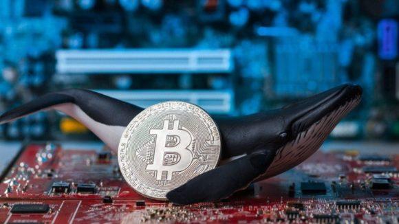 Son Fiyat Düşüşünde Balinalar 108 Milyon Dolarlık Bitcoin Topladı!