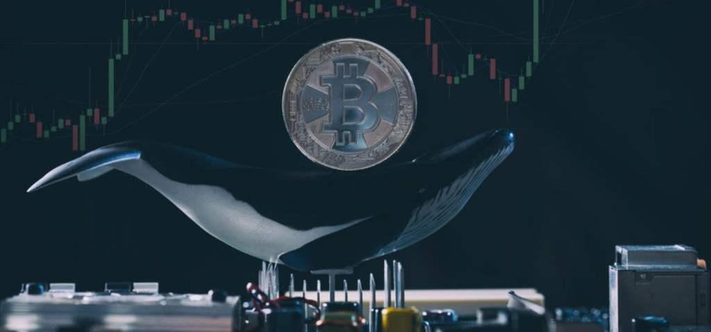 Devasa Balinalar, 2,85 Milyar Dolarlık Bitcoin Aldı!