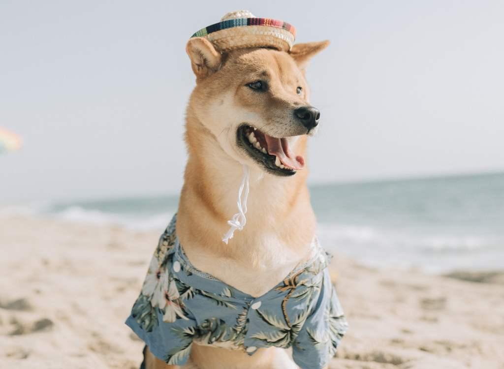 Analistler: Dogecoin Fiyatı Şimdi Bu Seviyeleri Görebilir