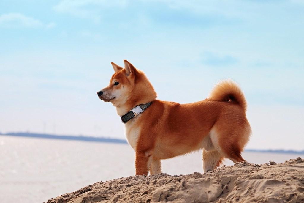 Meme Coin Patlaması: Bu DOGE Katili Uçtu!