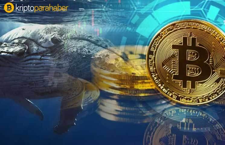 FOMO başladı: Balinalar geliyor, Bitcoin ve kripto paraları dipten almak için son şans olabilir!