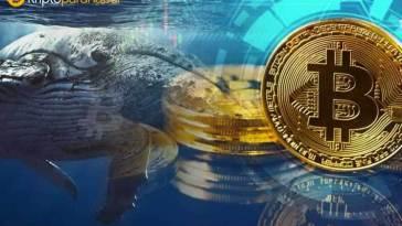 Bitcoin balinaları henüz sakin: Balinalar 42.616 BTC'yi test amacıyla taşıyor