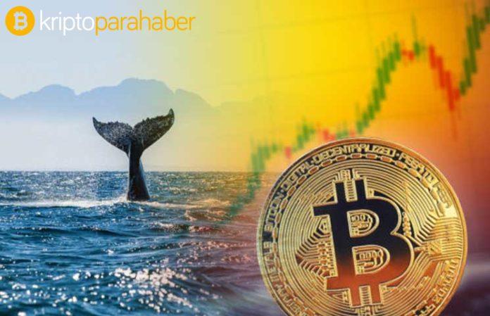 Bitcoin balinaları kâr peşinde: 380 milyon dolarlık BTC hareket ettiriliyor